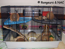 adoption de votre hamster informations et conseils. Black Bedroom Furniture Sets. Home Design Ideas